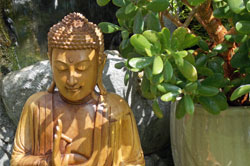 Buddha and money tree
